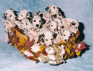 Puppiesinbasket
